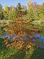 Botanischer Garten Berlin-Dahlem 10-2014 photo06 Taxodium distichum.jpg