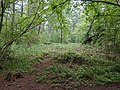 Bracken arising in Bourne Woods (geograph 6462290).jpg