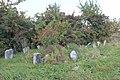 Briceni Jewish Cemetery 33.JPG
