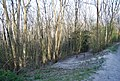 Bridleway junction, Babylon Down - geograph.org.uk - 2155886.jpg