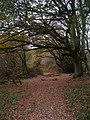 Bridleway to Milton Hide - geograph.org.uk - 614428.jpg