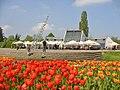 Britzer Garten - Tulipan 2013 - geo.hlipp.de - 36160.jpg