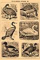 Brockhaus and Efron Encyclopedic Dictionary b46 786-3.jpg