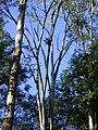 Bromélia no alto de árvore 3.jpg