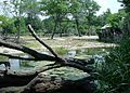 Brookfield zoo fg03.jpg