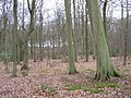 Brown's Wood - geograph.org.uk - 150468.jpg