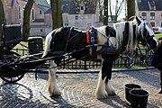 Bruges2014-147.jpg