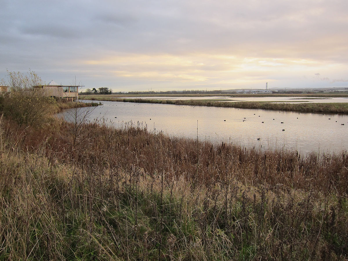 burton mere wetlands wikipedia
