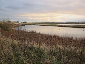 Burton Mere Wetlands - View towards the reception hide