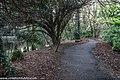 Bushy Park, Dublin (8389516195).jpg