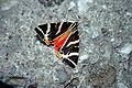 Buttefly 1.jpg