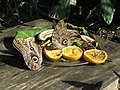 Butterfly Farm Grand Cayman.jpg