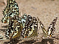 Butterfly Party (5440820707).jpg