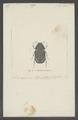 Byrasba - Print - Iconographia Zoologica - Special Collections University of Amsterdam - UBAINV0274 020 05 0009.tif