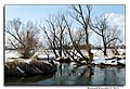 Bystrzyca River (60465684).jpeg