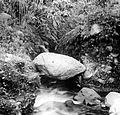 COLLECTIE TROPENMUSEUM Een hangende steen in Lahar Blitar bij de vulkaan Keloed Oost-Java TMnr 10004371.jpg