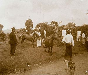 Bantenese people - Bantenese men with horses in the Bantam Residency (present day, Banten Province), circa 1915-1926.