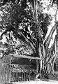 COLLECTIE TROPENMUSEUM Orchideënkwekerij Biliton Zuid-Sumatra ca. 1925 TMnr 10006177.jpg