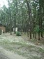 Camping Parque Curumim - panoramio - jkern (1).jpg