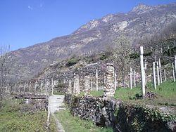 Wijngaard wikipedia - Wijnstokken pergola ...