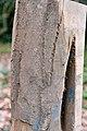 Carpinus betulus wood (01).jpg