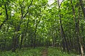Cedar Valley Nature Hiking Trail at Sugar Bottom Recreation Area forest, Iowa (35861232243).jpg