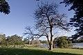Centennial Park NSW 2021, Australia - panoramio (8).jpg