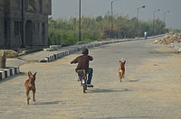Child cycling with two dogs - Boys best friend.jpg