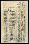 Chinese Materia medica, C17; Plant drugs, Cattail polle Wellcome L0039338.jpg