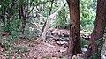 Chinnar River - panoramio (4).jpg