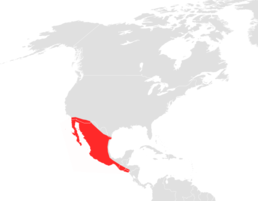 Choeronycteris mexicana map.png