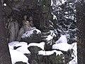Chotkovy sady - panoramio (7).jpg