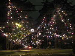 Christmas Tree Lane.jpg
