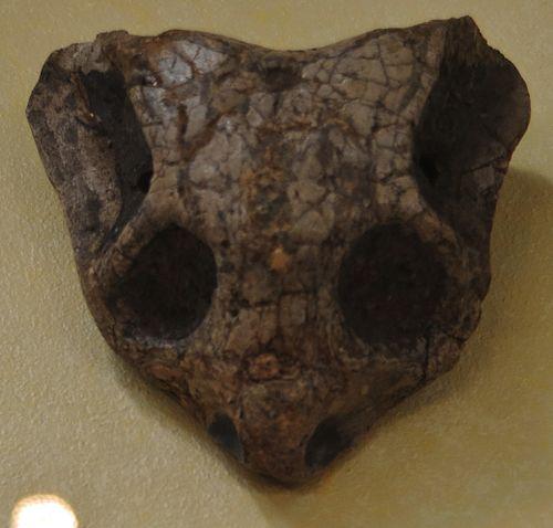 Cistecephalus