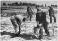 Civilian Conservation Corps - NARA - 195557.tif