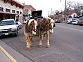 Clydesdales in Jerome.jpg