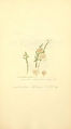 Coloured Figures of English Fungi or Mushrooms - t. 348.png