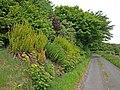 Colourful Roadside Bank - geograph.org.uk - 1348070.jpg