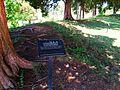 Confederate Earthworks, Historic Jamestowne, Colonial National Historical Park, Jamestown, Virginia (14422305291).jpg