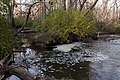 Confluence of Rocky Fork Creek and Sycamore Run 1.jpg