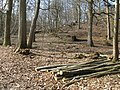 Coppicing in Fittleworth Wood - geograph.org.uk - 1209853.jpg