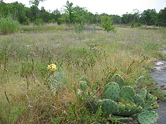 Couchville Cedar Glade State Natural Area - Image: Couchville glade
