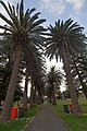 Cronulla NSW 2230, Australia - panoramio (161).jpg