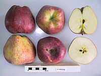 Cross section of Starking, National Fruit Collection (acc. 1951-034).jpg