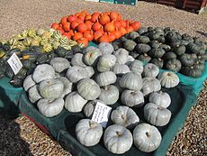 Cucurbita - Various squashes at Slindon.jpg