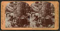 Cutting timber in the state of Washington, U.S.A, by Singley, B. L. (Benjamin Lloyd) 3.png