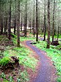 Cycle Trail in Kirroughtree Forest - geograph.org.uk - 431760.jpg