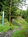 Cycle Trail in Kirroughtree Forest - geograph.org.uk - 431785.jpg