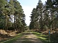 Cycle route through Slufters Inclosure, New Forest - geograph.org.uk - 145695.jpg