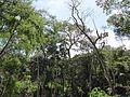 Degradação Florestal Amazônia 22.jpg
